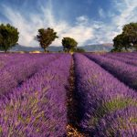 THE BEAUTY OF PROVENCE