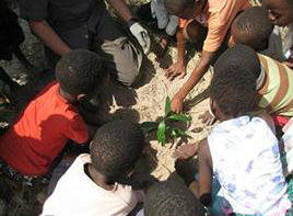 The Tree Planting Foundation in Mozambique